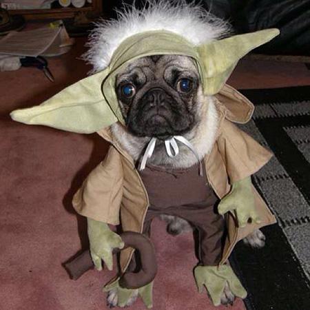 yoda-dog-costume_ev49cy